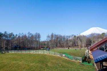 【ドッグリゾートWoof】山中湖近くのペット可ホテルに愛犬コーギーを連れて旅行してきた!