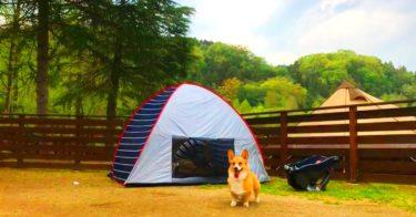 『わんダフルネイチャーヴィレッジ』わんこを連れて家族でキャンプ泊!ドッグランやドッグプールもある自然豊かな施設。