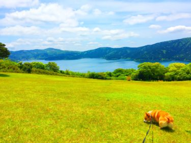 【仙石高原大箱根一の湯】箱根のペット可ホテルに愛犬コーギーを連れて旅行してきた!