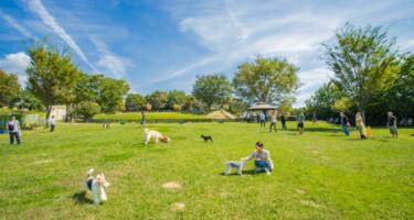 【世界の名犬牧場】国内最大級のドッグラン&わんこのお散歩体験の評判は?実際にわんこを連れて行ってきた!
